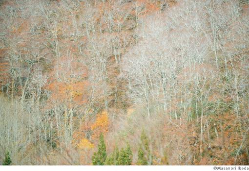 【会期延長!】池田晶紀展『模様』開催@COPAINS de 3331/CHAMP DIVIN 3331
